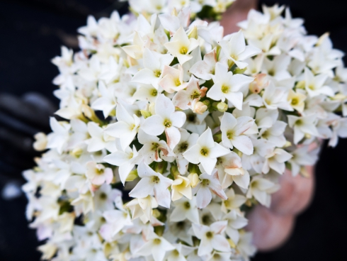 white flowers 5