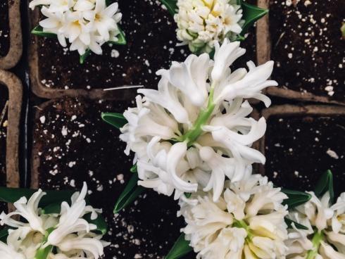 white flowers in soil