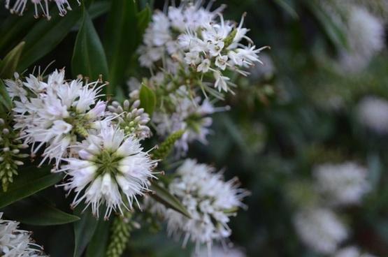 white flowers on shrubs
