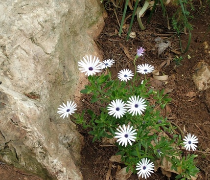 white flowers with stone