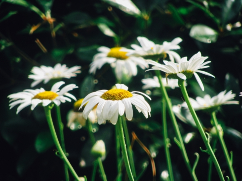 white flowers with yellow