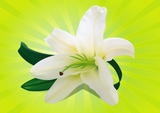 white orchid vector graphic