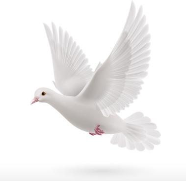 white pigeon realistic vector design