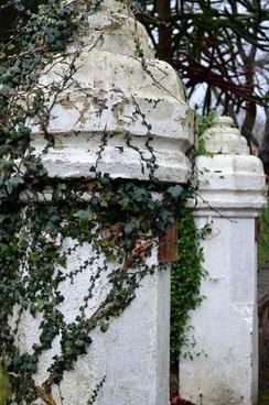white pillar and ivy