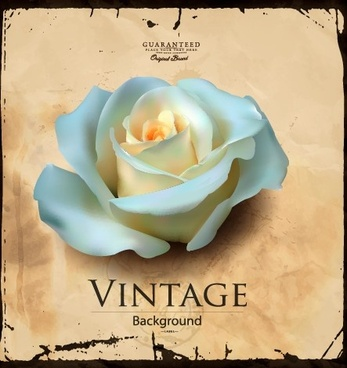 white rose and vintage background vector