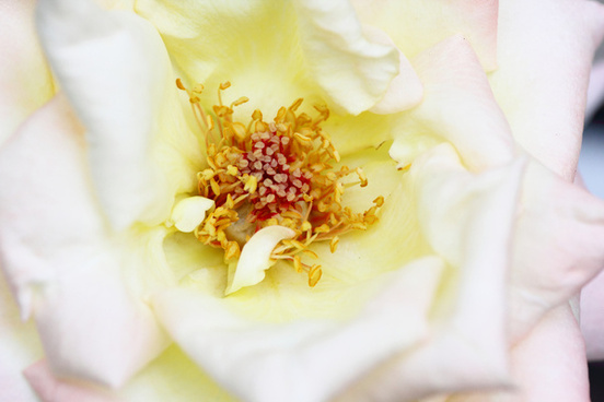 white rose matsudo chiba japan