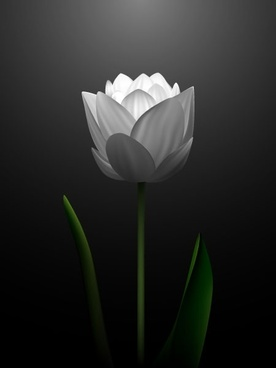 white tulips vector 2