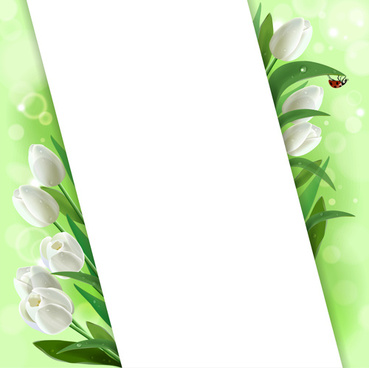 white tulips vector background graphics