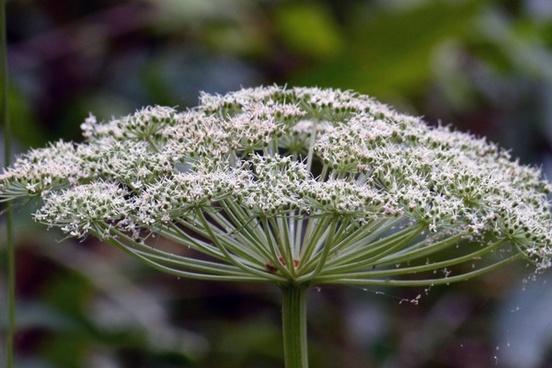 wild flower nature plant
