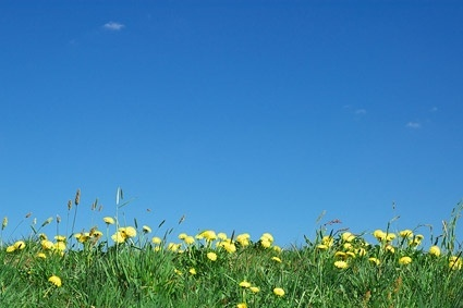 wild flowers and sky picture
