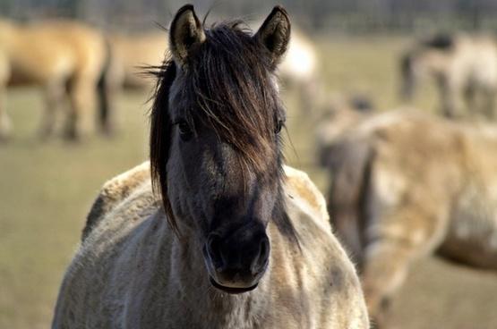 wild horse mare pregnant