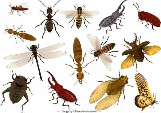 wild insects icons colorful 3d design
