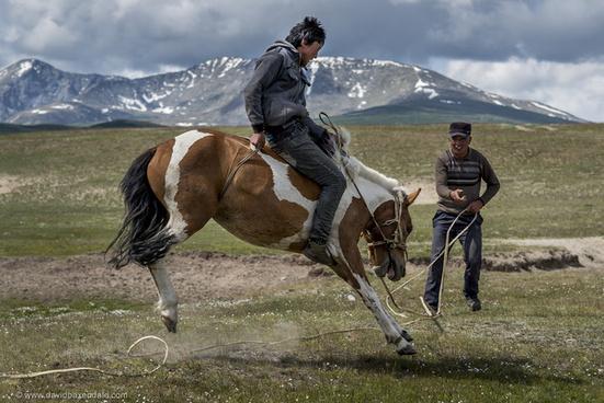 wild mountain horses