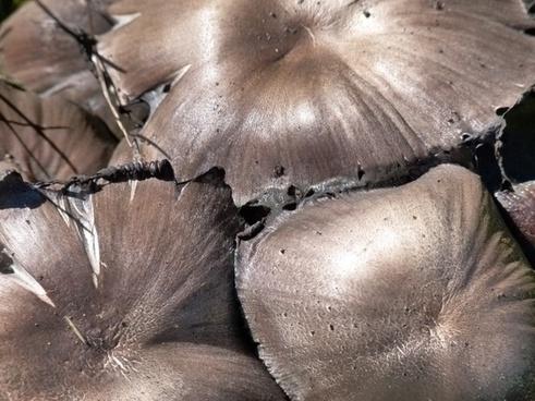 wild mushroom poisonous