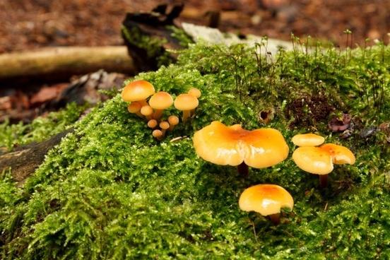wild mushrooms on moss