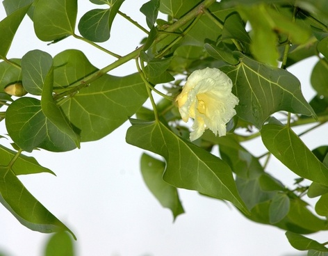 wild tropical flower