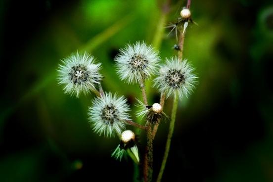 wildflower plants nature