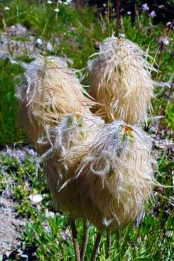wildflowers meadow alpine