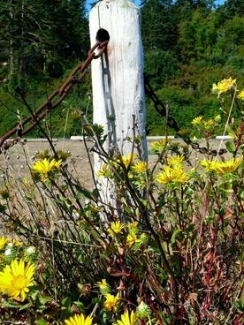 wildflowers post chain