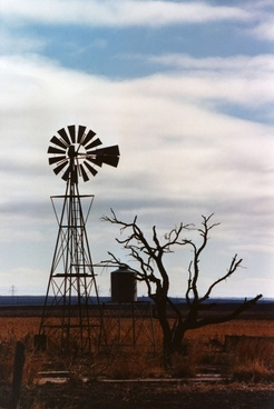 windmill and old tree
