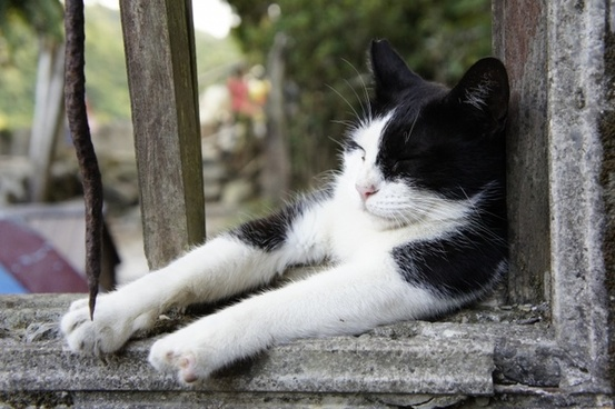 windows cat sleeping their palate