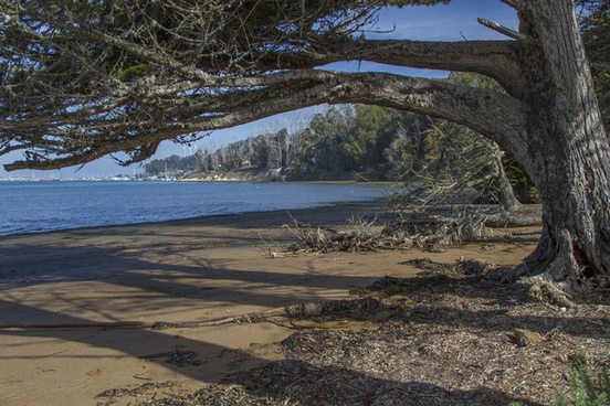 windy cove low tide
