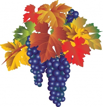 wine grapes icon shiny colorful modern design