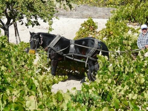 wine vineyard management