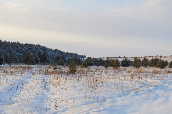 winter forest 7