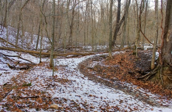 winter forest at weldon springs natural area missouri