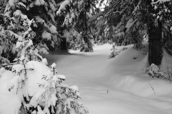 winter forest bw