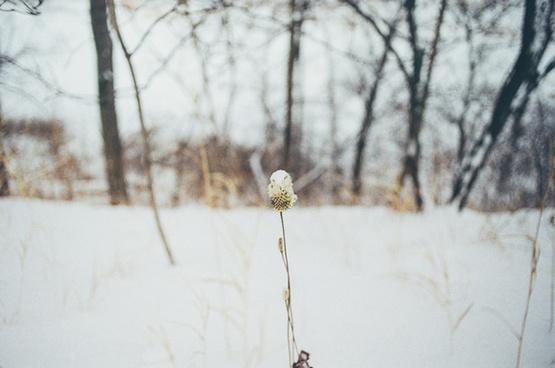 winter is gone