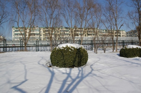 winter nature scene in beijing