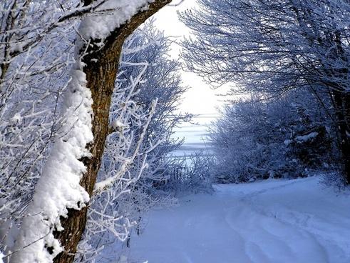 winter snow trail