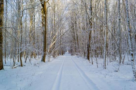 winter traces snow