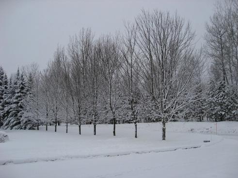 winter tree snow