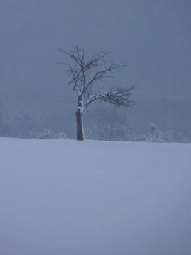 winter tree wintry