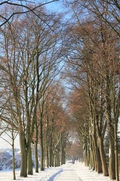 winter tree-lined avenue avenue