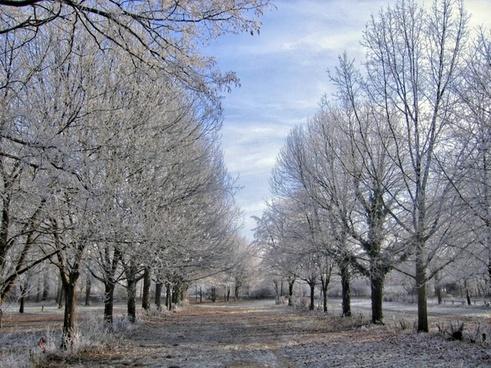 winter trees ice