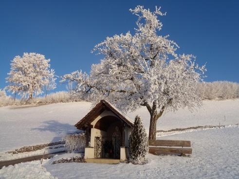 winter wintry shrubs