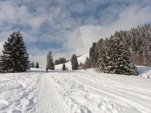 winter wintry winter magic