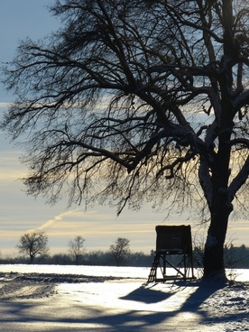 wintry tree away