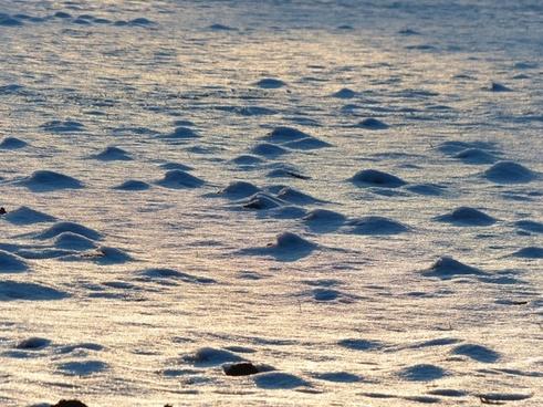 wintry winter frozen
