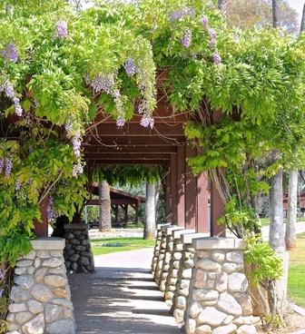 wisteria vine path