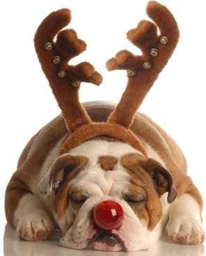 with reindeer antlers red nose puppy