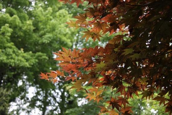 wood autumn tree