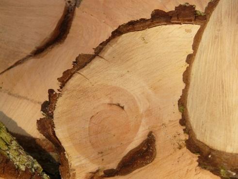 wood firewood saw