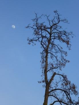 wood moon blue