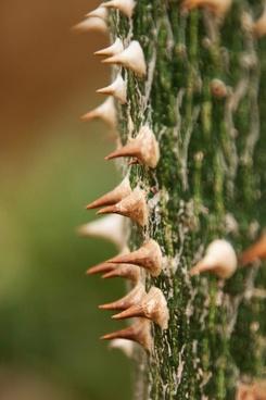 wood plant flora