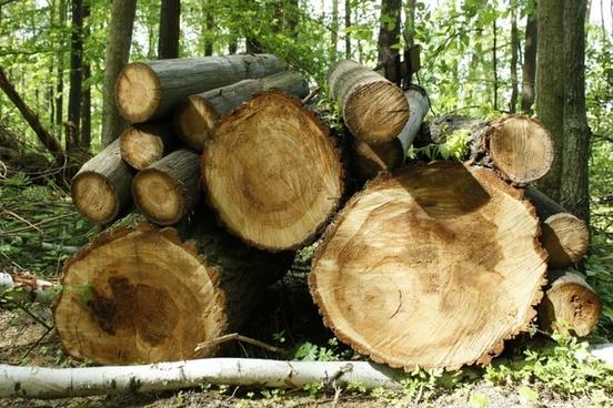 wood trunk tree